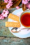 Beautiful, vintage teacup with Japanese cherry tree blossom and Scottish shortbread, close up. Beautiful, vintage teacup with Japanese cherry tree blossom and Royalty Free Stock Photos