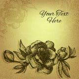 Beautiful vintage textured cherry flower Royalty Free Stock Photos