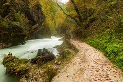 Beautiful Vintgar Gorge near Bled, Slovenia Royalty Free Stock Photography