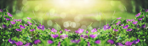 Beautiful violet bells flowers, greens and bokeh lighting in the garden, summer outdoor floral nature background Stock Images
