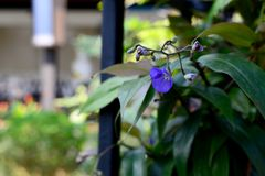 Beautiful of Violet Flower royalty free stock photos