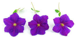Beautiful violet flower Stock Photo