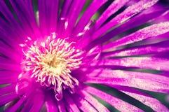 Beautiful violet flower close up