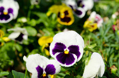 Beautiful violet flower Stock Photography