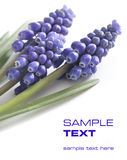 Beautiful violet flowers Stock Images