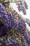 Beautiful violet flowers Stock Image