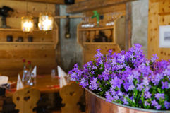 Beautiful violet flowers in a restaurant,Switzerland Royalty Free Stock Photos