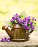 Beautiful violet flowers Royalty Free Stock Photography