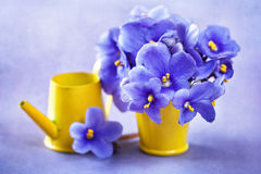 Beautiful violet flowers Royalty Free Stock Photo