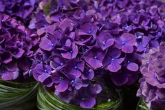 Violet hydrangea decoration with glass Royalty Free Stock Images