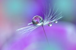 Beautiful Violet Nature Background.Art Photography.Floral Design.Colorful Abstract Macro.Water Drop.Web Banner.Relaxation.Flowers Stock Images