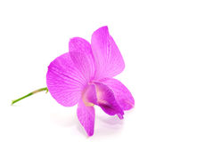 Beautiful violet orchid Royalty Free Stock Photos
