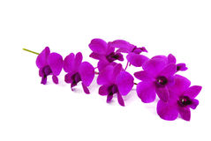 Beautiful violet orchid Stock Images