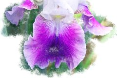 Branch with a violet orchid blossom - Blooming garden flowers in the summer, watercolor brush design. Beautiful violet orchid blossom - Blooming garden flowers stock images