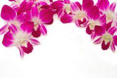 Beautiful violet  orchid border isolate Royalty Free Stock Image