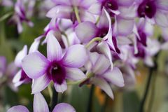Beautiful violet orchid in the garden stock image