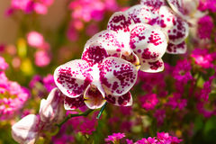Beautiful violet Orchids flowers Stock Images
