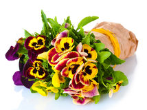 Beautiful violet pansies Stock Image