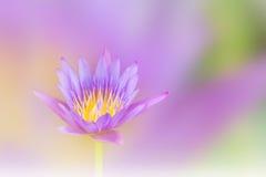 Beautiful violet purple dreamy  lotus flower on soft pastel Royalty Free Stock Photo