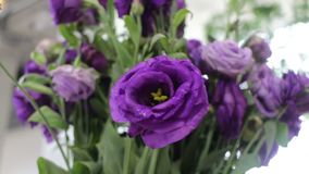 Beautiful violet rose flowers bouquet stock footage