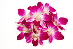 Beautiful violet Thai orchid isolate Stock Photo