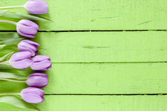 Beautiful violet Tulips Royalty Free Stock Photos