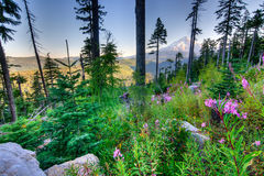 Beautiful Vista of Mount Hood in Oregon, USA. Royalty Free Stock Photo