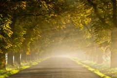 Beautiful vivid autumn scene with misty road. Through the alley Stock Photo
