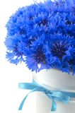 Beautiful vivid blue flowers of cornflower. Royalty Free Stock Image