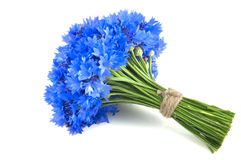 Beautiful vivid blue flowers of cornflower. Royalty Free Stock Photography