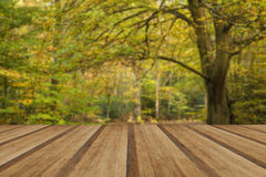Beautiful vivid golden Autumn Fall forest landscape with wooden Stock Photo