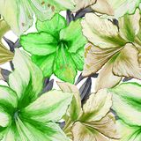 Beautiful vivid green amaryllis flowers on white background. Seamless spring pattern. Watercolor painting. Hand painted floral illustration. Fabric, wallpaper Royalty Free Stock Photography