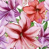 Beautiful vivid purple and red amaryllis flowers on white background. Seamless spring pattern. Watercolor painting. Hand painted floral illustration. Fabric stock illustration
