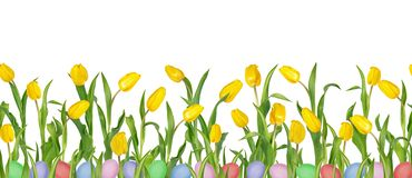 Beautiful vivid yellow tulips on long stems with green leaves and colorful Easter eggs in seamless pattern. Isolated on white background. Can be used as a royalty free stock image
