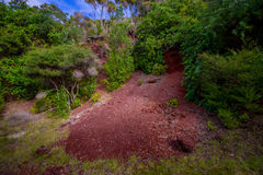 Beautiful volcanic Rangitoto Island, with a red clay ground in a sunny day perfect for hiking Stock Image