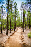 Beautiful walking footpath in the mountain forest Royalty Free Stock Images