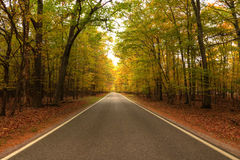 Beautiful walkway in with fall colors in Michigan USA Royalty Free Stock Image