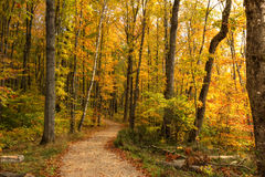Beautiful walkway in with fall colors in Michigan USA Stock Photos