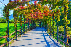 Beautiful walkway. With green and red plants Stock Photography