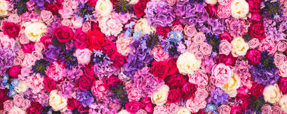 Beautiful wall made of red violet purple flowers, roses, tulips, press-wall, background. Beautiful wall made of red violet purple flowers, roses, tulips, press royalty free stock photo