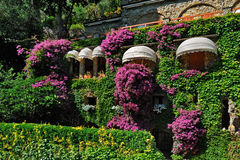 Beautiful wall overgrown bougainvillea with sun visors Royalty Free Stock Photos