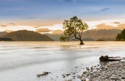 Beautiful Wanaka lake during sunset, New Zealand Royalty Free Stock Photography