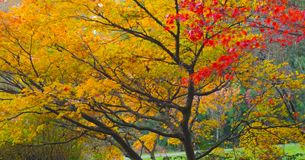 Beautiful Washington Autumn Nature Scenery - Fall foliage in Washington State.  royalty free stock photography