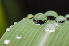 Beautiful water  drop on green leaf macro . Stock Images