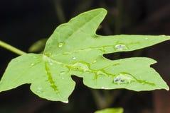 Beautiful water  drop on green leaf macro . Stock Photo