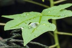 Beautiful water  drop on green leaf macro . Stock Images