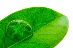 Beautiful water drop on a leaf shoot and recycle logo. In macro lens Stock Photos