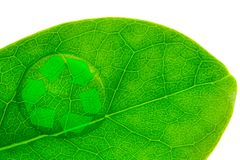 Beautiful water drop on a leaf shoot and recycle logo. In macro lens Stock Photography