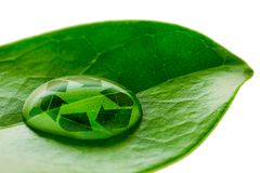 Beautiful water drop on a leaf shoot and recycle logo. In macro lens Royalty Free Stock Images
