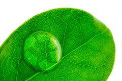 Beautiful water drop on a leaf shoot and recycle logo. In macro lens Royalty Free Stock Photo